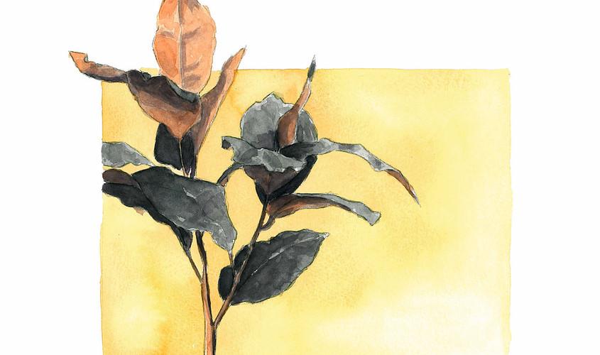 Simpliciter II, Acquerello su carta, 17x21 cm, 2012