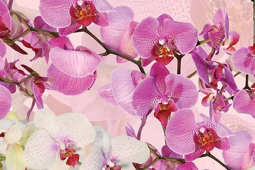 MSK Орхидеи