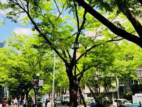 Omotesando Area