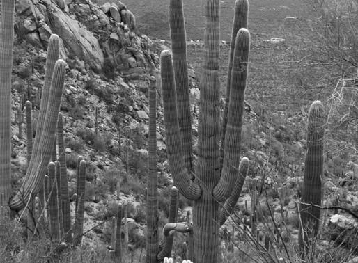Tucson 2014