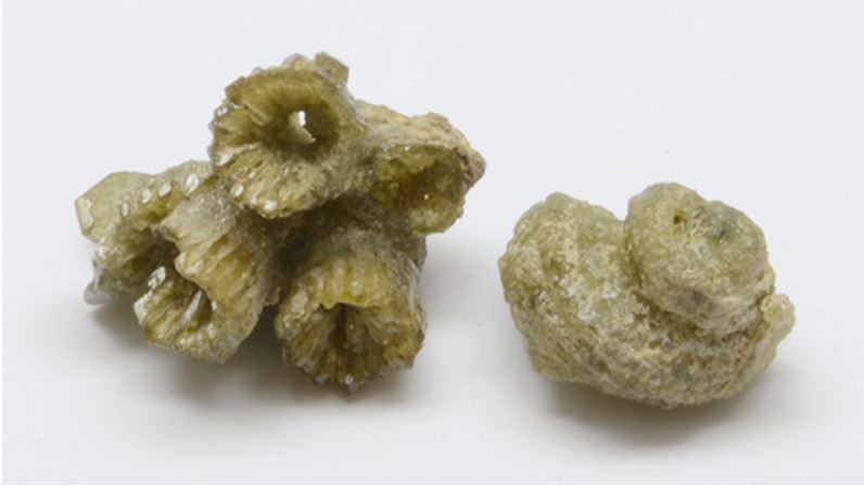 These coral (left) and gastropod (right) fossils are pseudomorphs in demantoid garnet from Ambanja, Madagascar. The coral measures 1.5 × 1 cm. Photo by Pierre-Yves Chatagnier.