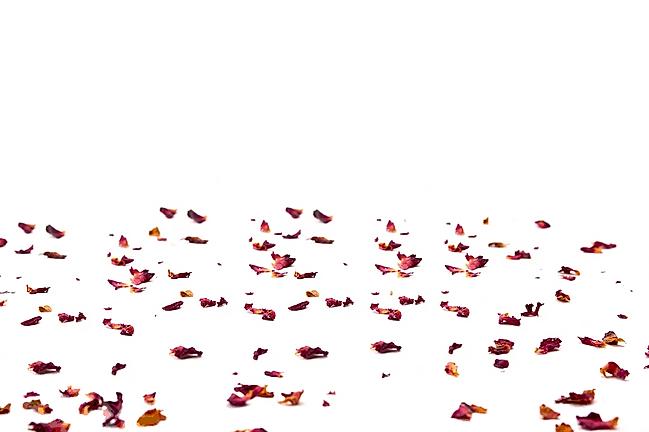 petalsfade.png