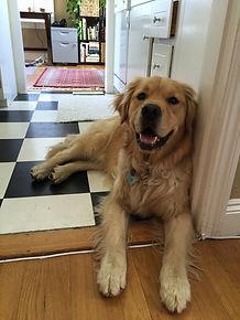 Drop-In Visits / Potty Breaks / Bathroom Breaks / Pet Sitting