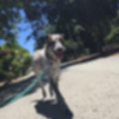 Private Dog Walks