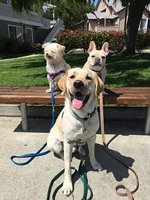 Small Group Dog Walks