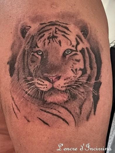 Tigre couleur.jpg