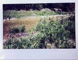 PV-farawaygrass