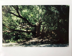 PV-trees
