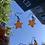 Thumbnail: Baby Orange Stars