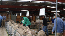 Sale Results - 20th On Property Ram Sale