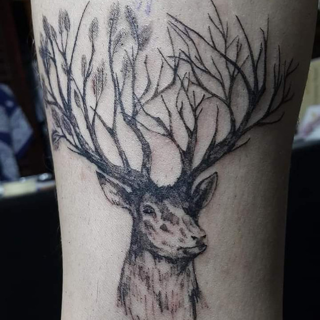 Black and grey deer