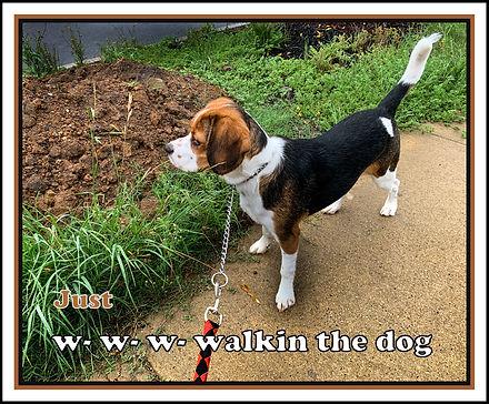 walkin the dog.jpg