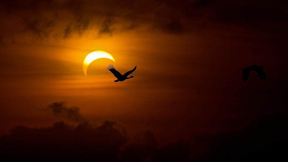 birds_geese_swans_night_sun_light_darkne