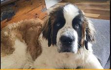 Duice - not just an ordinary dog.JPG