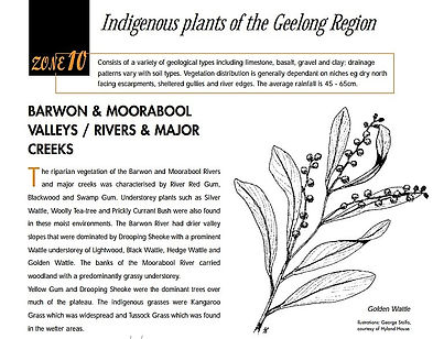Indigenous plants.jpg