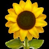 sunflower_1f33b.png