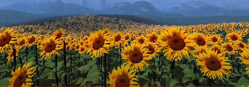 Sunflowers clip.jpg