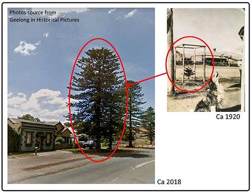 Not a lone pine.jpg