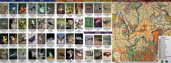 Moorabool Fauna.jpg