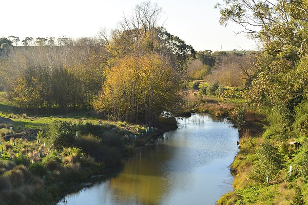 Looking upstream from the Fyansford Moni