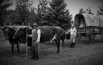 oxen-and-wagon B&W.jpg