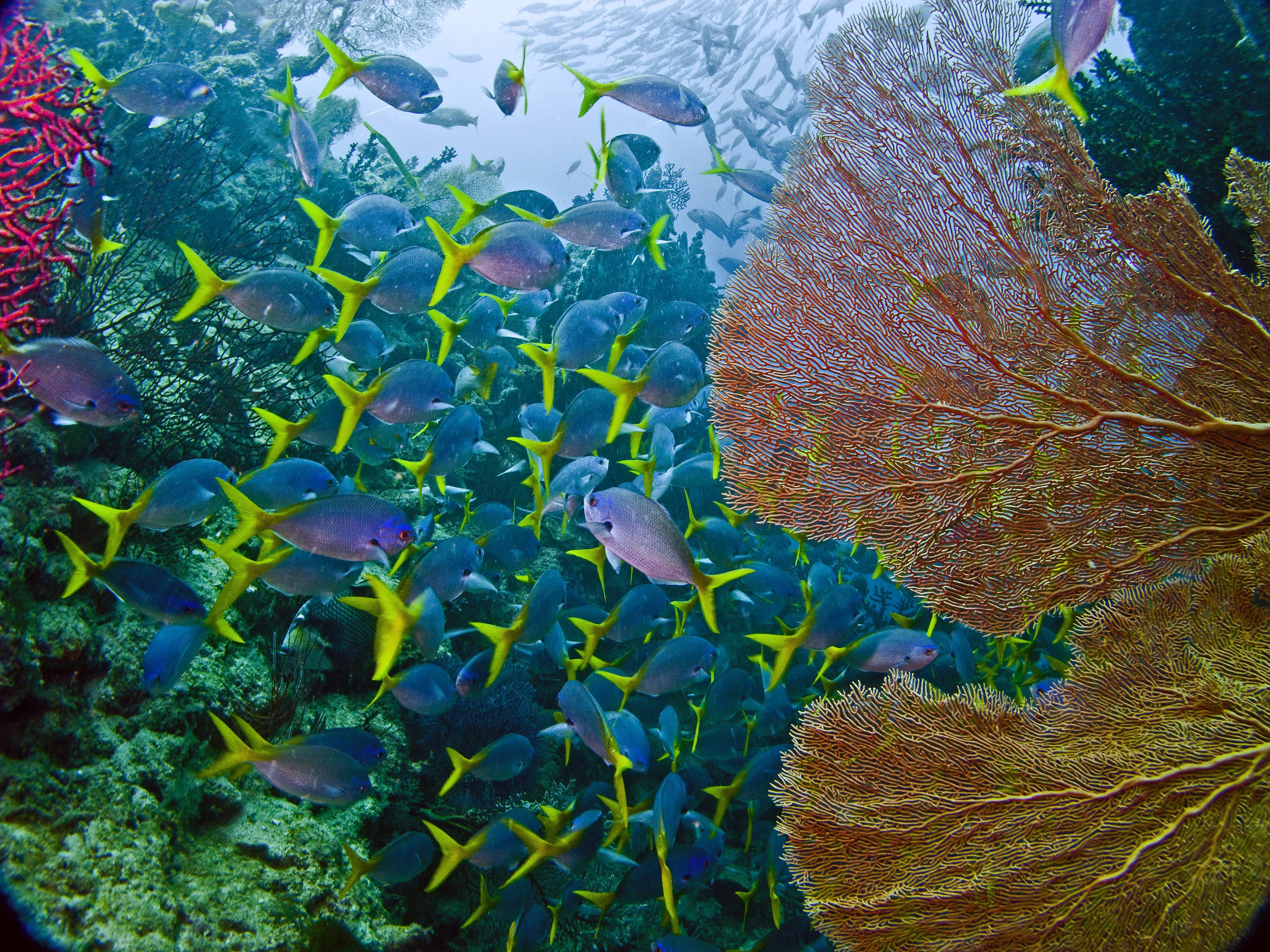 All-inclusive Two-Dive Boat Trip
