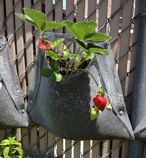 Vertically Linked Garden Planter / Next Level Gardening Solution. United States Design Patent No. US D686,431 S / July 23, 2013