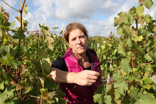 Carole vigne