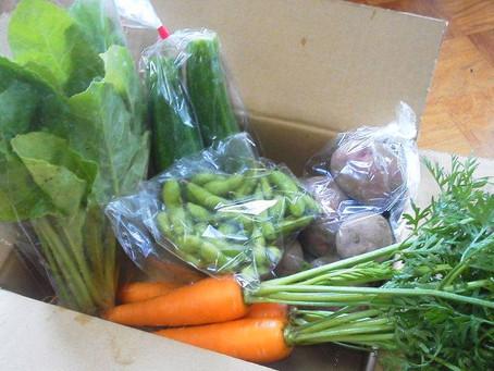 無肥料無農薬野菜の販売、復活!
