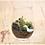 Thumbnail: 草原のシカ