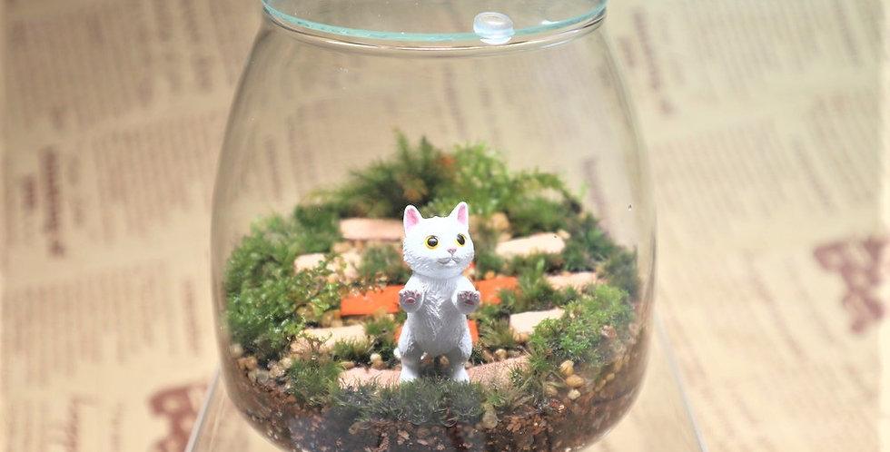 たっち白猫