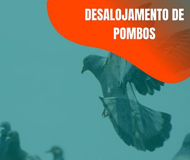DESALOJAMENTO DE POMBOS (4).png