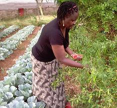 Pamela harvesting.jpg