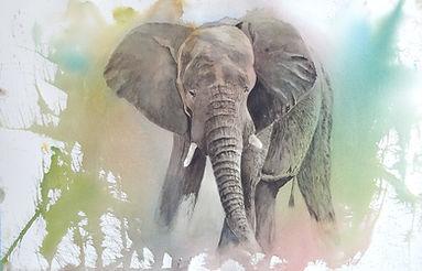 BenjaminDenis_Elephant.jpg