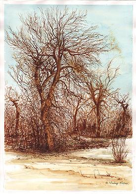 SudeepKumar_Winter Trees.jpg