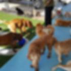 Dogs Family 1.jpg