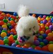 Ball Pit!!!!