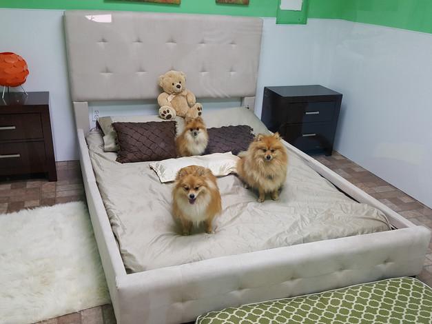The Triplets on big bed.jpeg