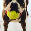 Fetch All Day