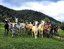 cabres.jpg
