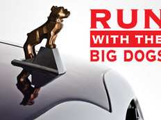 Running With Big Dogs