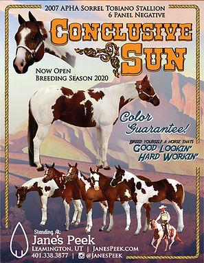 Conclusive Sun Flyer 2020 - Small.jpg