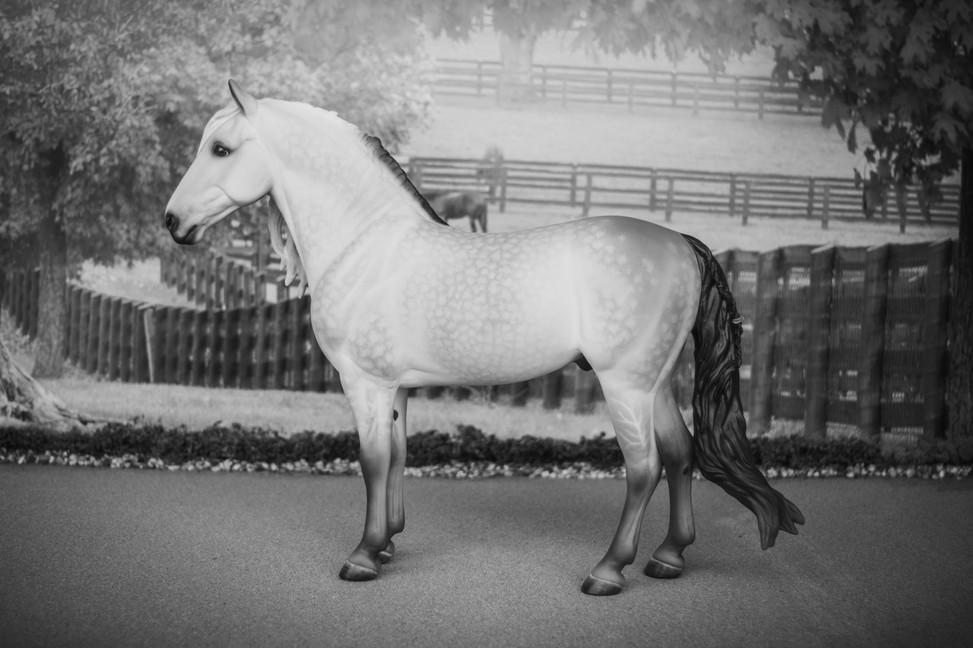 Custom Spanish Horse