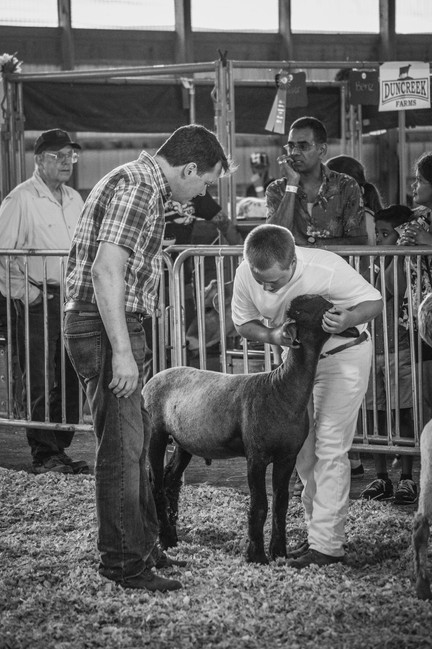 Master Showman Sheep Altamont '18
