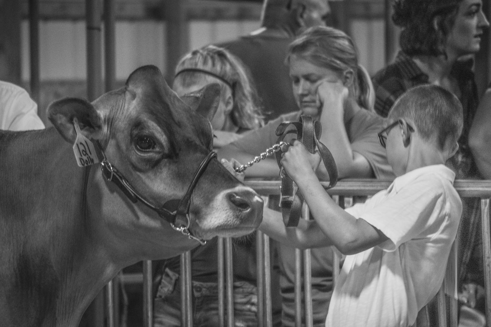 Master Showman Dairy Altamont '18