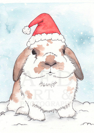 Holiday Holland Lop