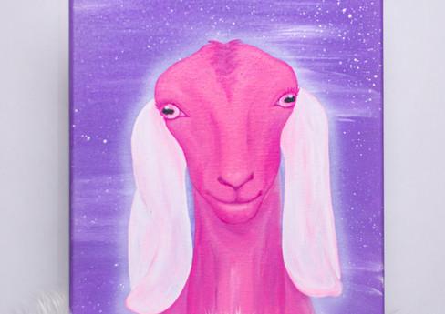 Pink Nubian