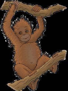 orangutan-clipart-md.png