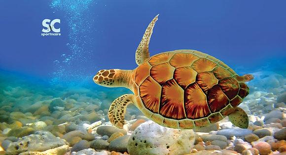 Turtle - MT5035