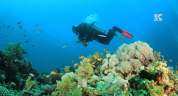 Diver Coral Reef - MT5126
